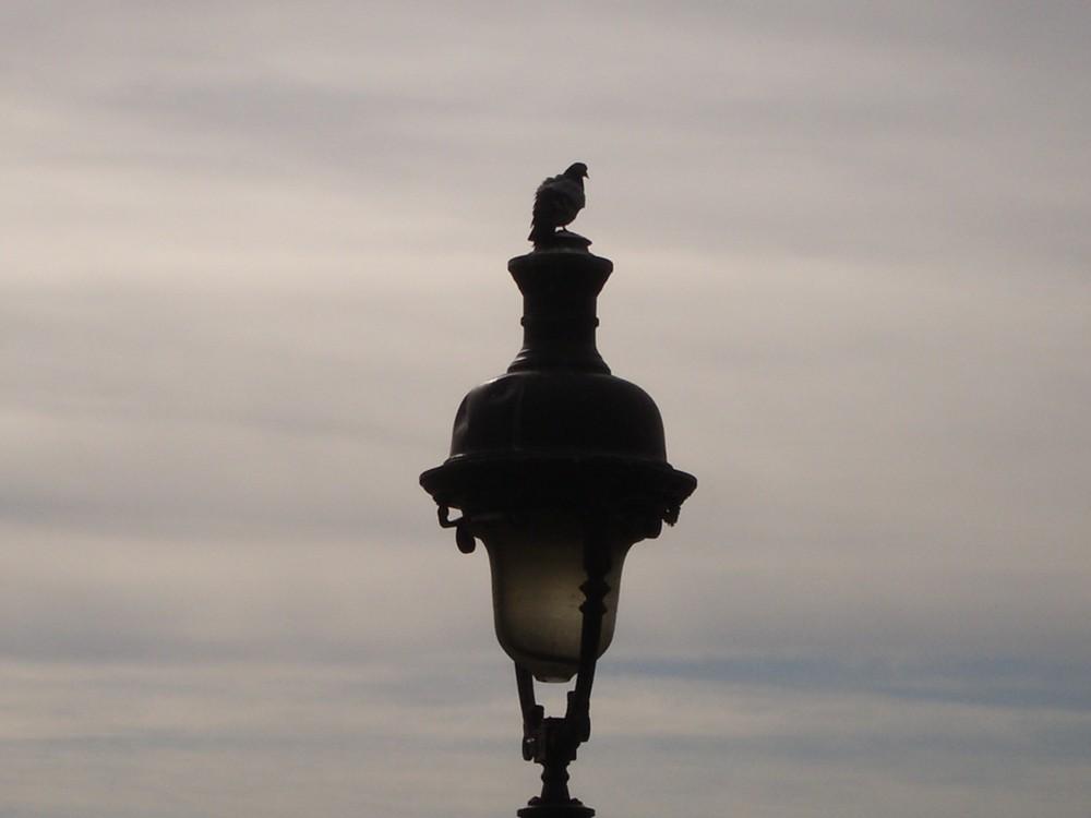 der einsame Vogel