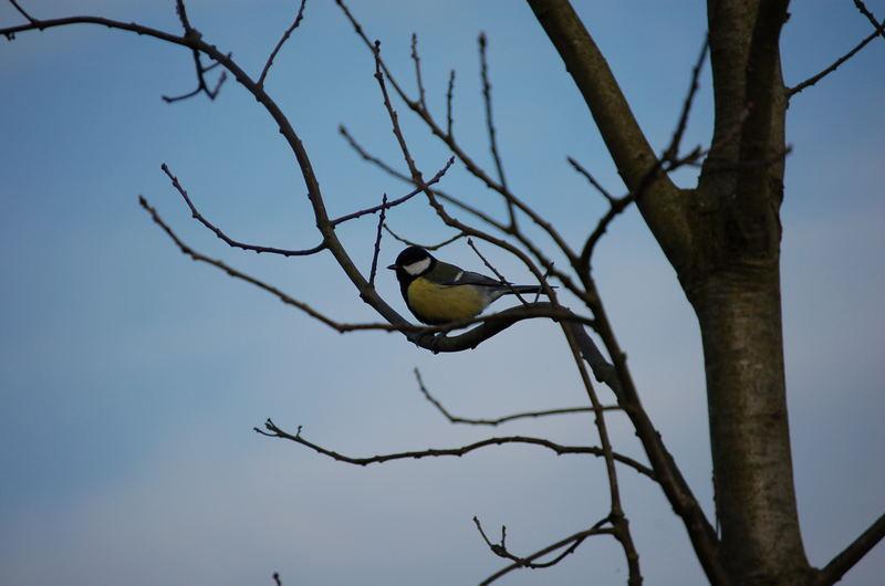 Der einsamme Vogel