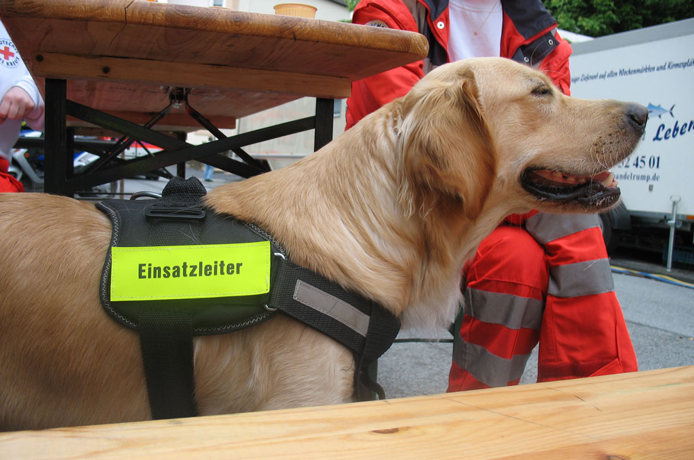 Der Einsatzleiter-Hund