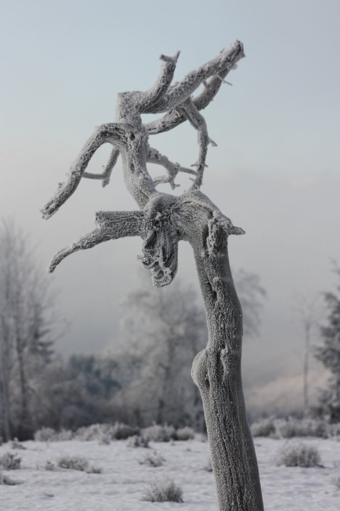 Der Eisbaum
