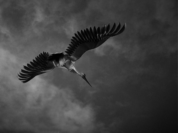Der eiserne Vogel