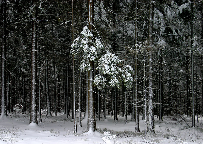 Der eiserne Wald