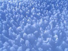 Der Eiswald