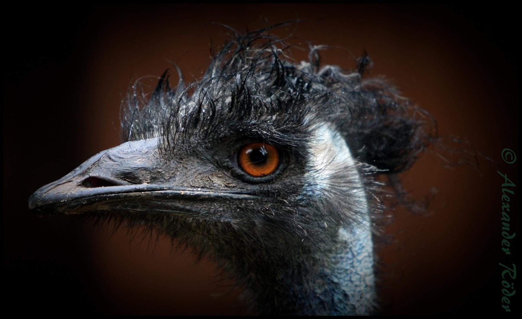 der EMU