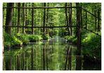 Der Erlenhochwald bei Alt-Zauche im Spreewald