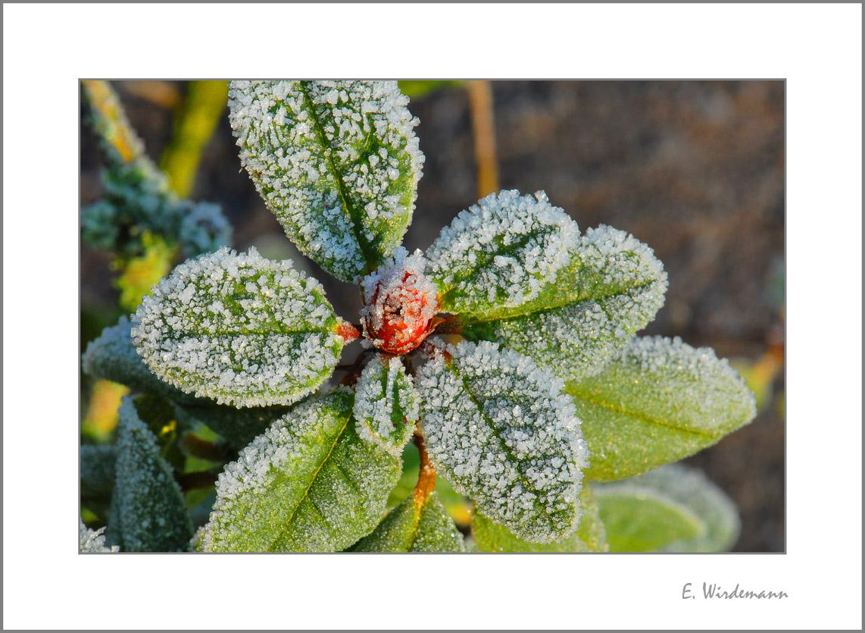 ***Der erste Frost***