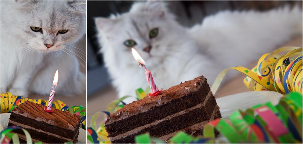Der erste Geburtstag! ***Bitte Profilstory lesen. ;-) ***