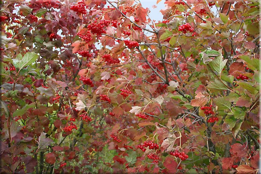 Der erste Herbstwind