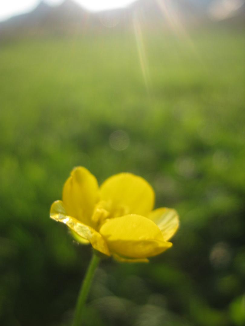Der erste Lichtblick des Frühlings...