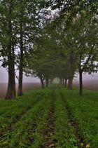 *** Der erste Nebel ***