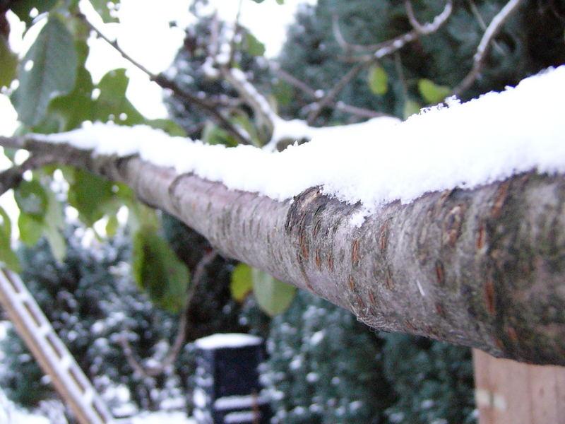 Der erste Schnee 2005