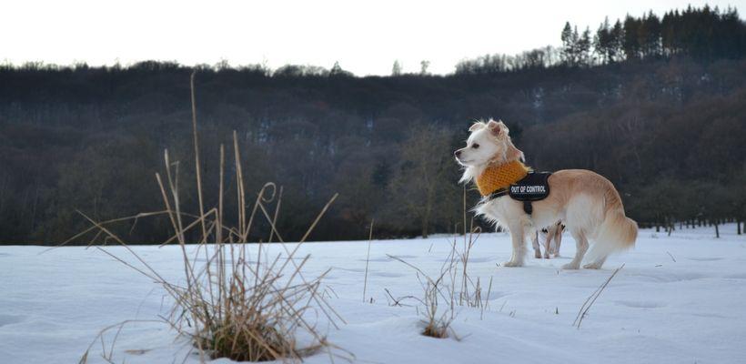Der erste Schnee 2012