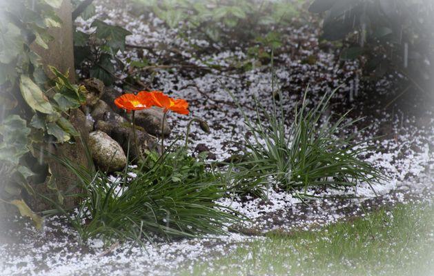 """Der erste """"Schnee""""....."""