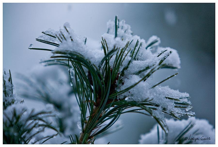 - der erste Schnee -
