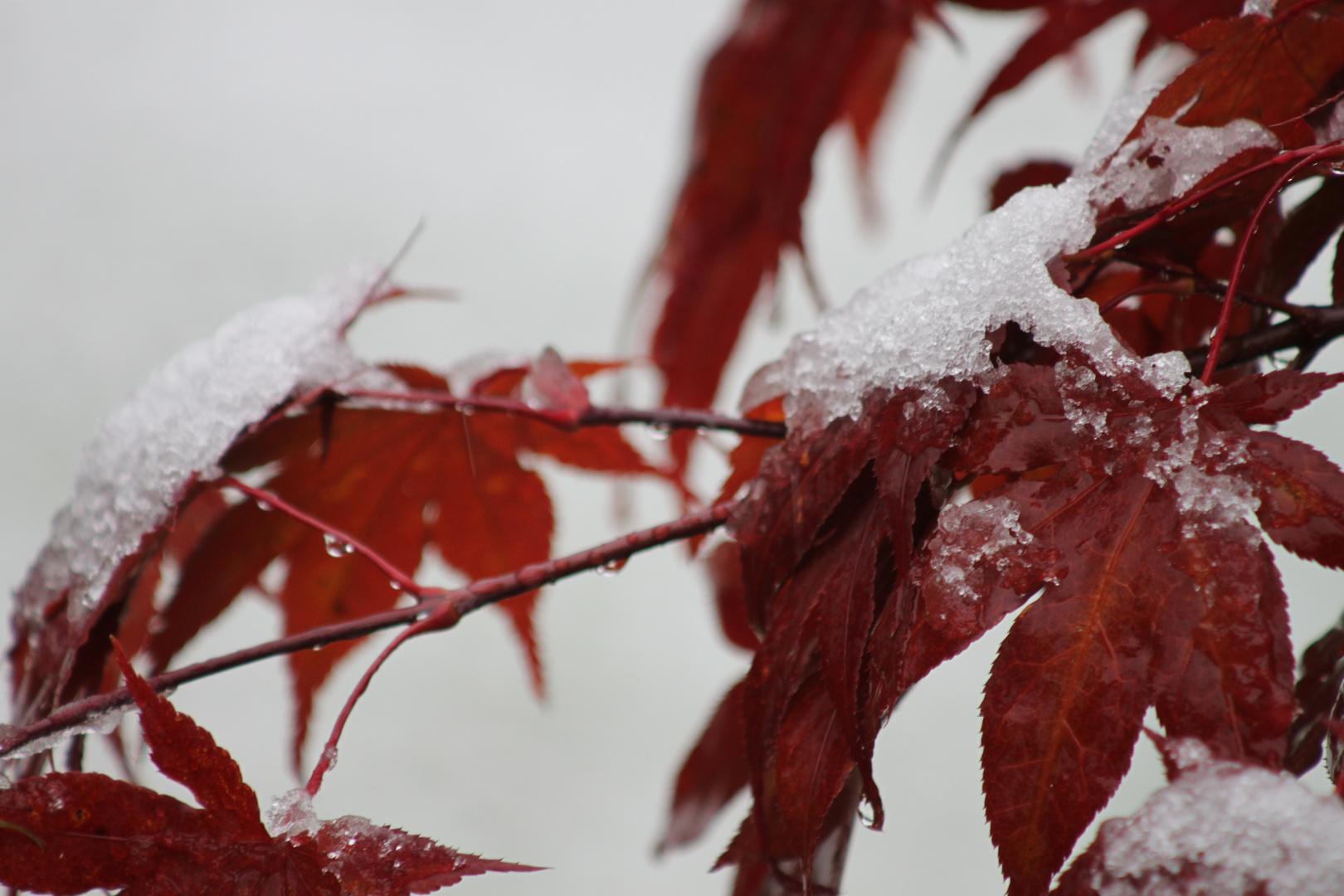 Der erste Schnee :)
