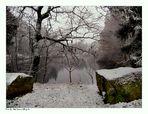 Der erste Schnee...