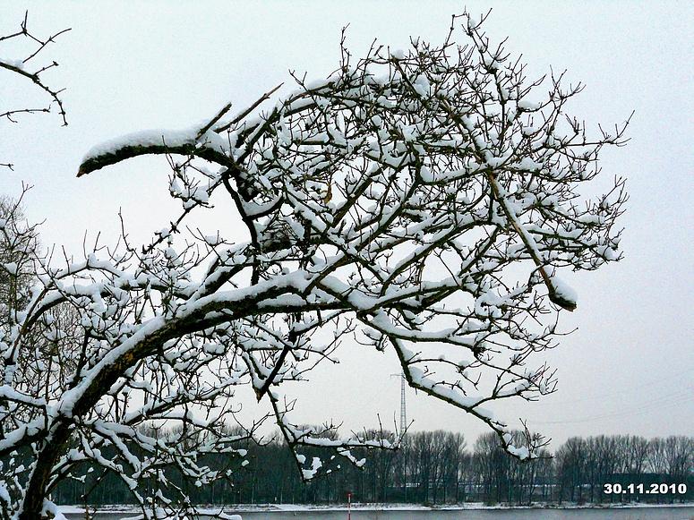 Der erste Schnee / Düsseldorf Rheinwiese 30.11. 2010