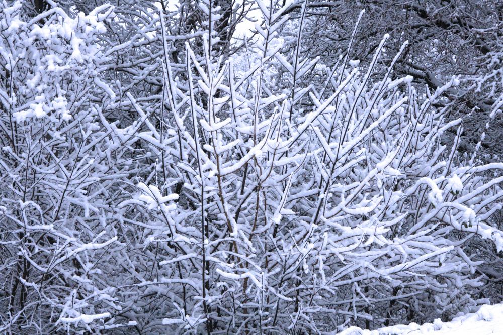Der erste Schnee...November 2010
