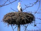 Der erste Storch