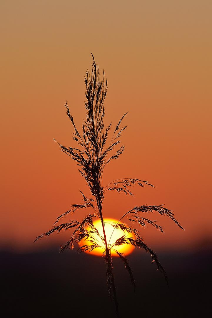 Der ersten Sonne letztes Licht