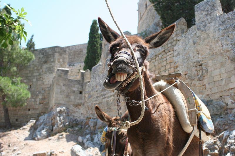 Der Esel