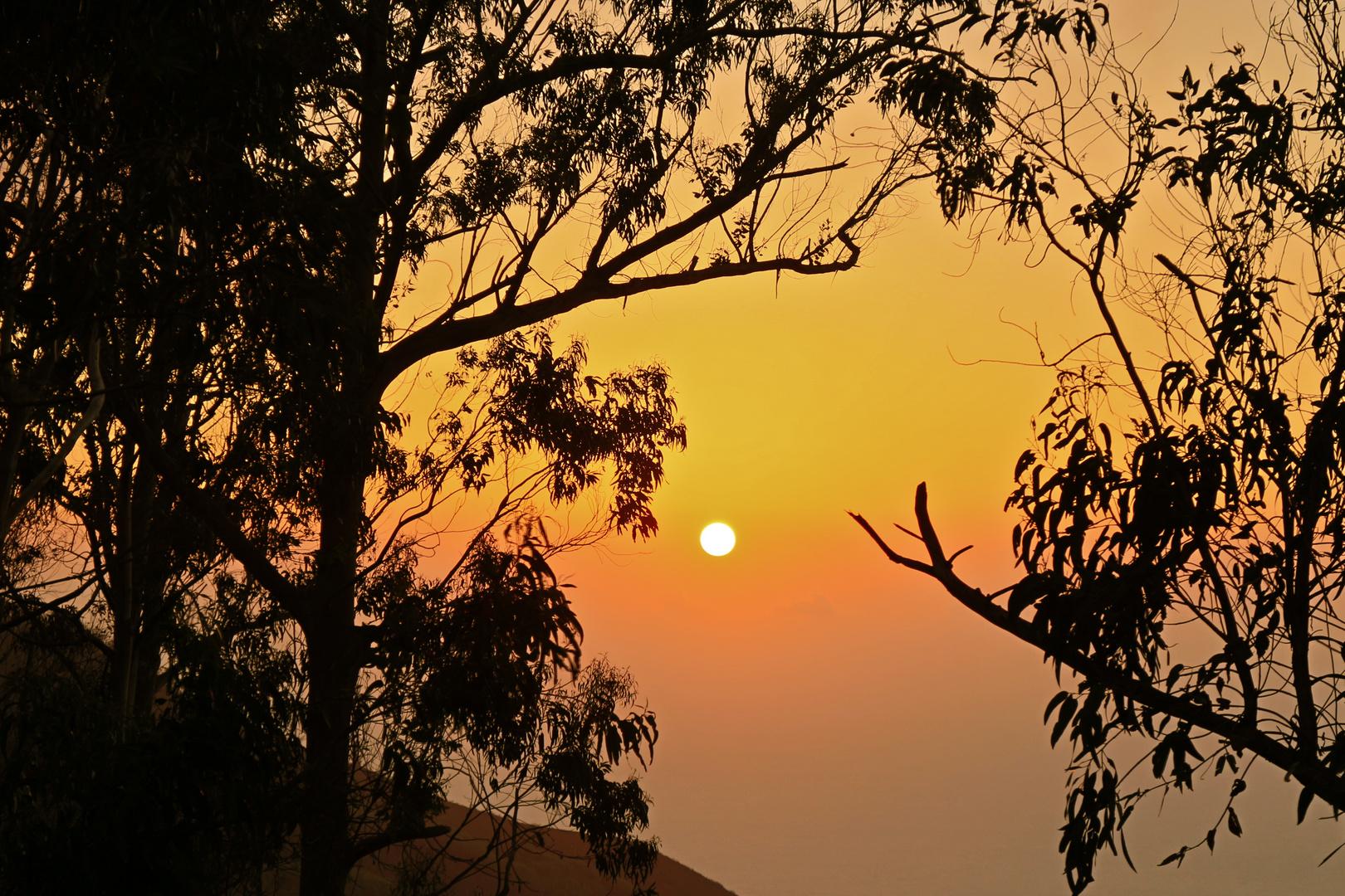 Der Eukalyptuswald verabschiedet die Sonne