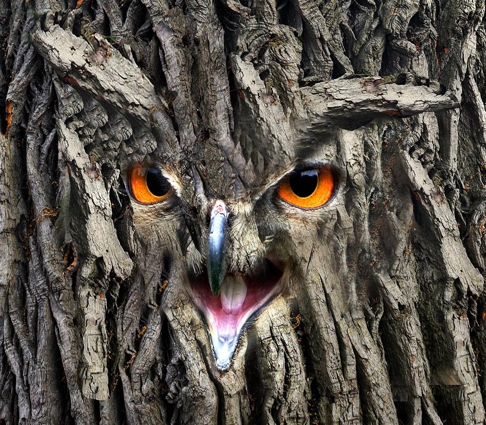 Der Eulenbaum