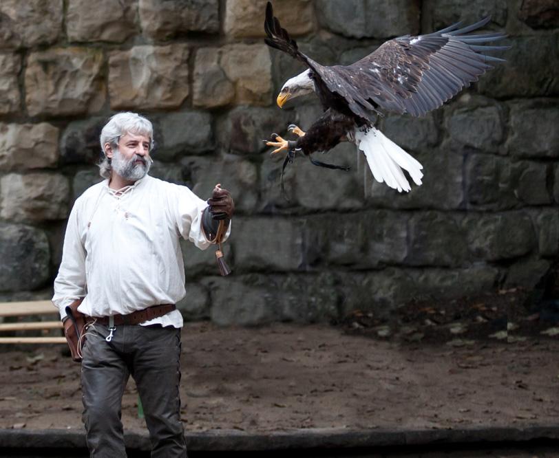 Der Falkner