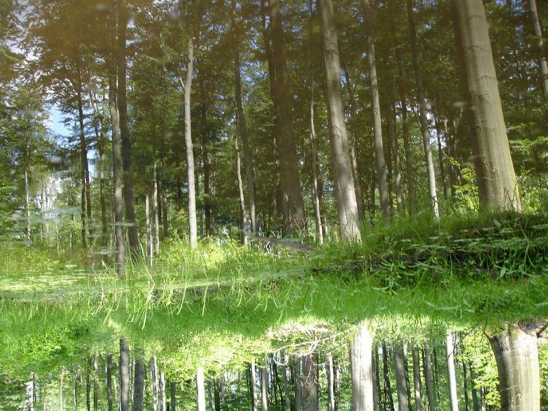 Der falsche Wald!
