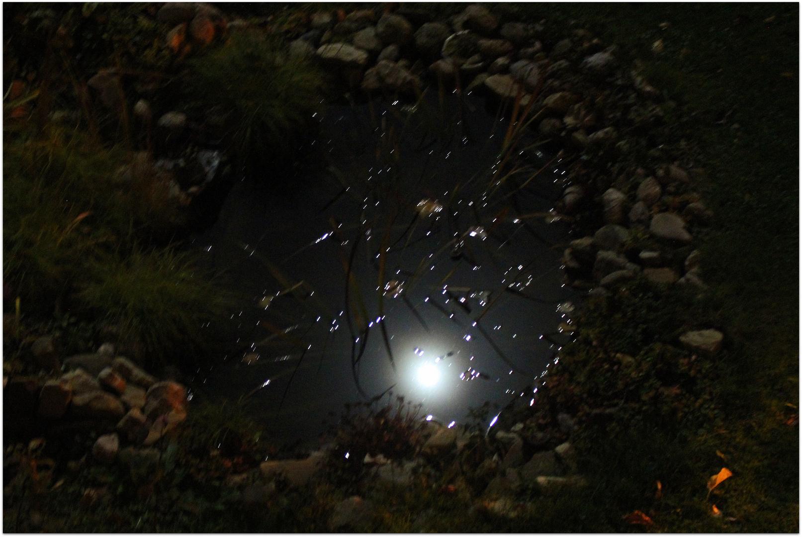 Der (fast-) Vollmond spiegelt sich in unserem Gartenteich