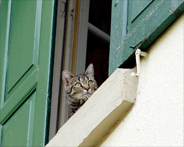 Der Fenstergucker