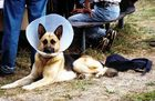 Der Fernsehhund