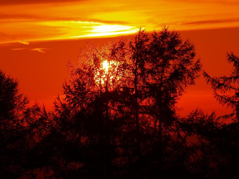 der Feuerwald