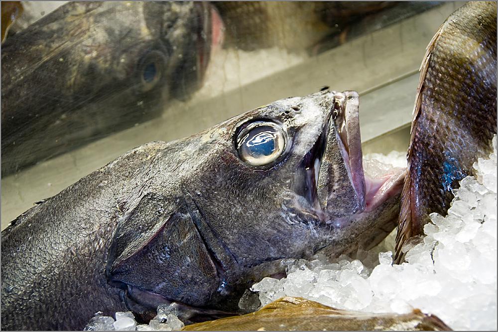 Der Fisch...