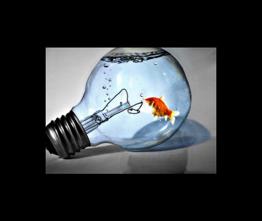 Der Fisch im Glas Foto  Bild  wolpertinger quatsch  fun