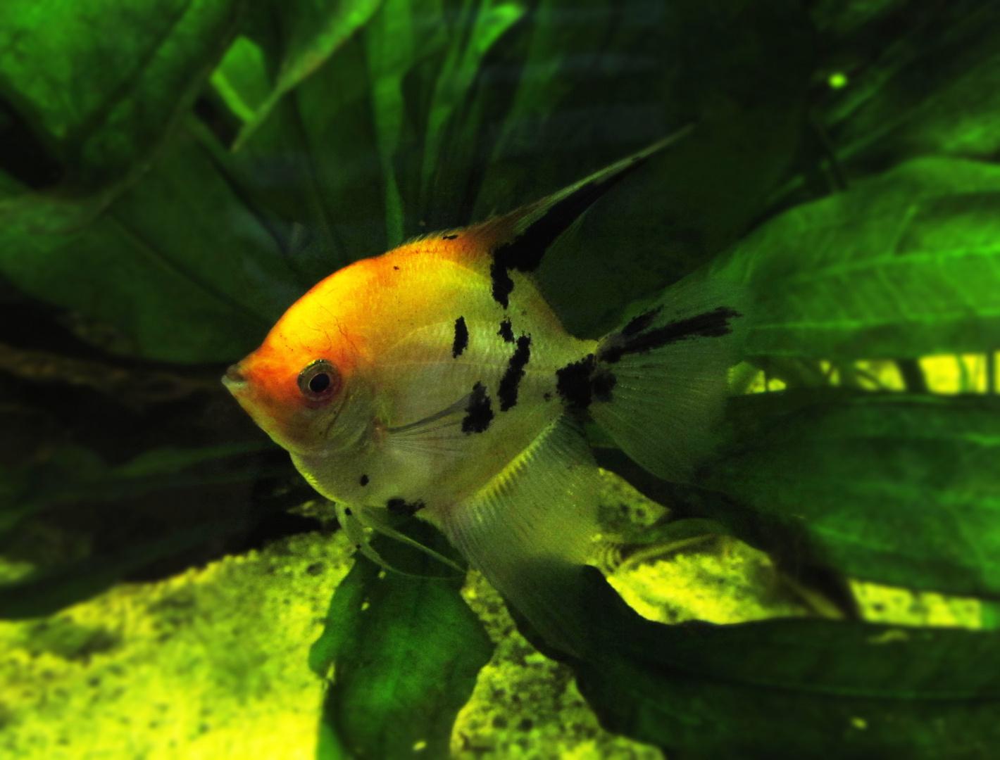 Der Fisch von meinem Opa,(: