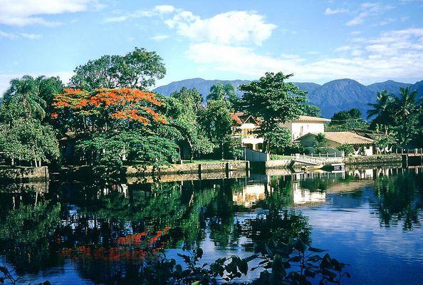 Der Flamboyant- Baum spiegelt sich