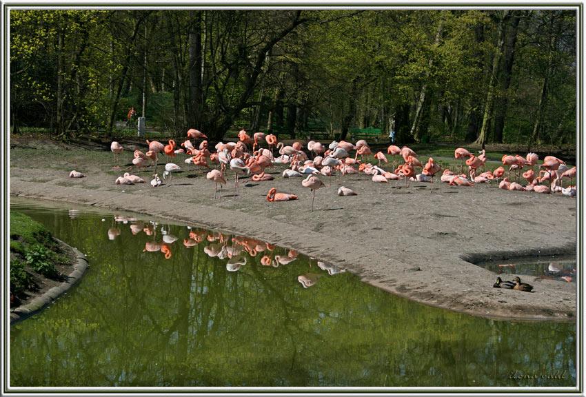 Der Flamingo-Clan