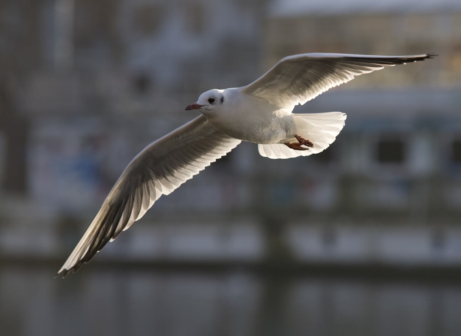 Der fliegende Vogel getarnt als fliegende Möwe