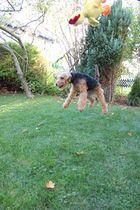 der fliegene Hund