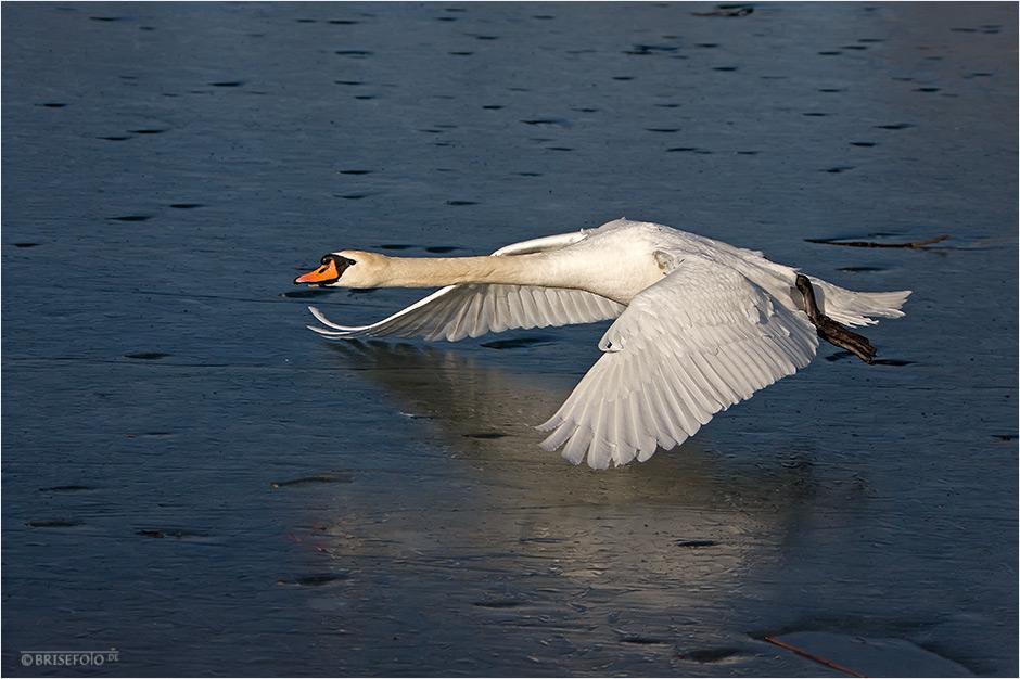 Der Flieger über dem Eis