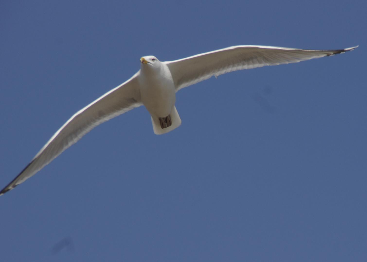 Der Flug der Möwe