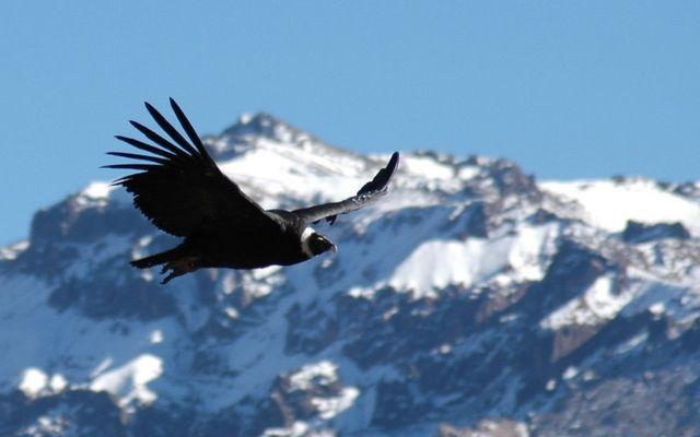 Der Flug des Kondor