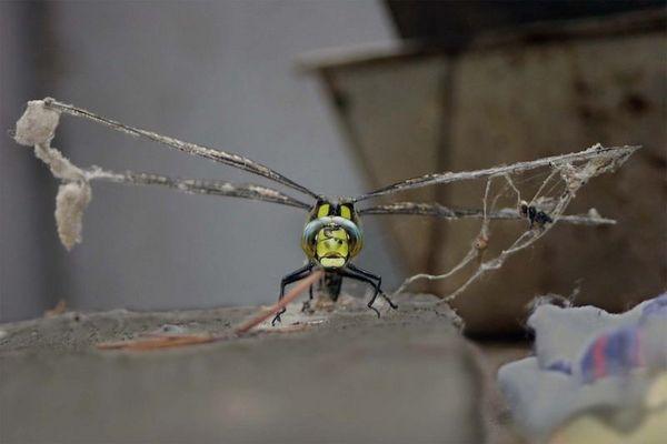 Der Flug durch das Spinnennetz