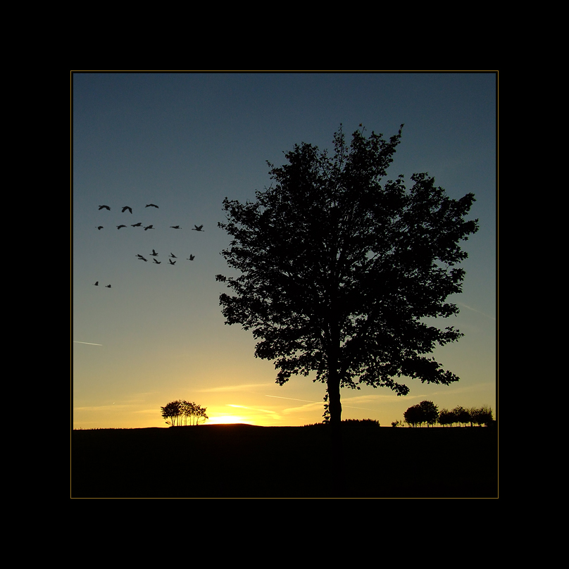 ~Der Flug in den Sonnenuntergang~