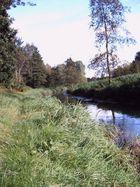 Der Fluss am Waldweg 2