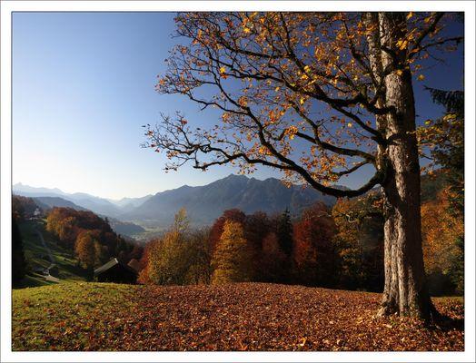 Der Foto-Baum