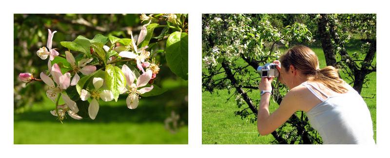 Der Fotograf