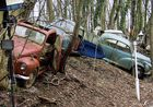 Der Friedwald für alte Autos