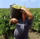 Der fröhliche Weinbauer